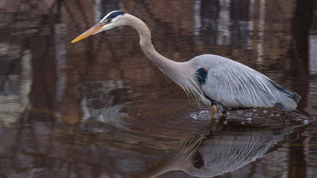 GBH - fishing Links Pond