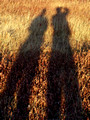 Shadows at sunset - Big Meadow - SNP