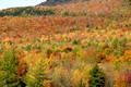 Fall colors - Lincoln Gap Rd