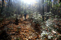 Hiking the Laurel Prong Trail