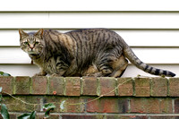Cat on a ledge