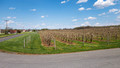 Young apple trees - Marker-Miller Orchards - Rt 622
