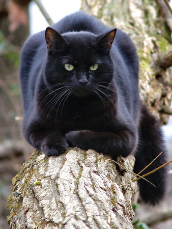 Homeless cat on fallen tree trunk