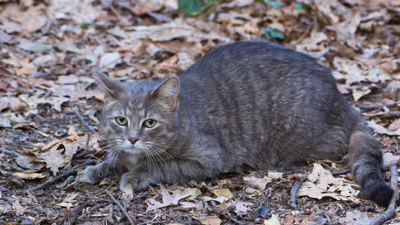 Cat on the forest floor
