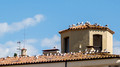 Gulls on Terracotta - Besalu