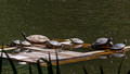 Red-eared Slider convention - Lake Audubon