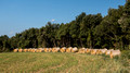 Rolled bales lining a field north of Besalu Spain